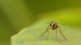 Beautiful little fly macro focus with soft background stock photo