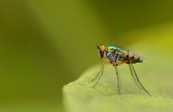 Beautiful little fly macro focus with soft background Royalty Free Stock Images