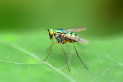 Beautiful little fly with soft background Royalty Free Stock Photo