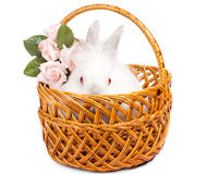 Beautiful little white bunny with roses Stock Images