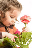 Beautiful little girl arranging flowers in vase Royalty Free Stock Photos
