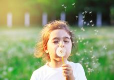 Beautiful little Girl blowing dandelion flower in sunny summer p. Ark. Happy kid having fun outdoors at sunset Stock Photos