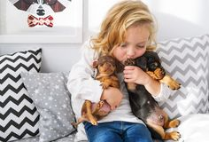 The beautiful little girl embraces two little charming puppies of a dachshund royalty free stock photo