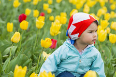 Beautiful little girl on a field of  coloured tulips Stock Image