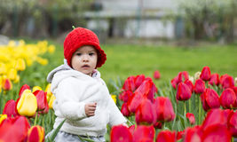 Beautiful little girl on a field of coloured tulips Stock Photography