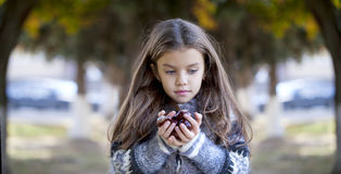 Beautiful little girl holding a chestnut Royalty Free Stock Image