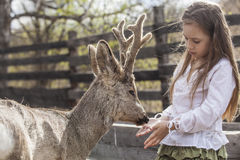 Beautiful little girl hugging animal ROE deer in the sunshine. Protecting an animal Stock Images