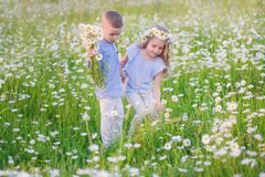Beautiful little girl hugging a little boy in a field of chamomiles royalty free stock photography