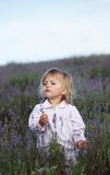 Beautiful little girl in a lavender field Royalty Free Stock Image