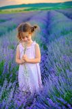 Beautiful little girl is picking a bouquet on a lavender royalty free stock photos