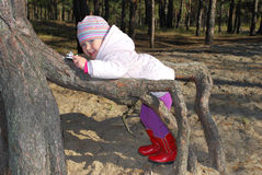 Beautiful little girl playing in the roots of a tree. Stock Photography