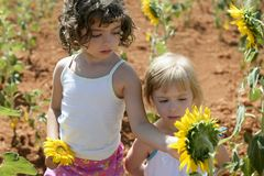 Beautiful little girl in a summer sunflower field Royalty Free Stock Photos