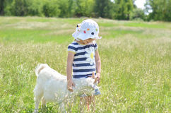 Beautiful little girl touch the goat in the field Stock Photo