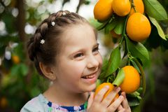 Free Beautiful Little Happy Girl In Colorful Dress In Lemon Garden Lemonarium Picking Fresh Ripe Lemons In Her Basket Stock Images - 115607564