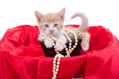 Beautiful little  kitten Royalty Free Stock Photography