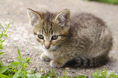 Beautiful little kitten Stock Images