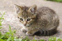 Beautiful little kitten Stock Images