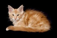 Beautiful little kittens Stock Photo