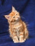 Beautiful little kittens Royalty Free Stock Image