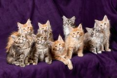 Beautiful little kittens Royalty Free Stock Images