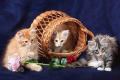 Beautiful little kittens Stock Photos