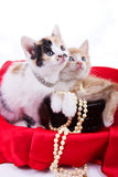 Beautiful little  kittens Royalty Free Stock Image