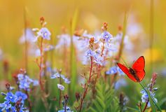 Beautiful little orange butterfly sits on a summer meadow with lush green grass and bright blue flowers on a Sunny day stock photos