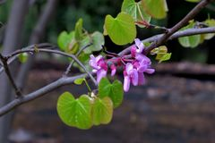 Beautiful little pink flowers on thin branches close up stock image