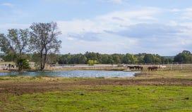 Beautiful little pond on a farm in Oklahoma. USA 2017 Stock Photos