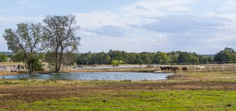 Beautiful little pond on a farm in Oklahoma. USA 2017 Royalty Free Stock Images