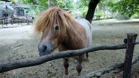 Beautiful little pony. In safari park Royalty Free Stock Image