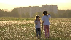 Beautiful little sisters collect dandelion seeds and blows them in wind blown small Girls play and have fun outdoors in meadow in. Two beautiful little sisters stock video