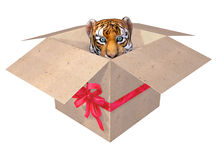 Beautiful little tiger in a box. Royalty Free Stock Photo