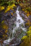 Soothing Power of Water. A beautiful little waterfall flows over a rock face partially covered with moss stock image