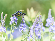 Beautiful little wild meadow of purple flowers with a butterfly. On natural green grass background Royalty Free Stock Photos