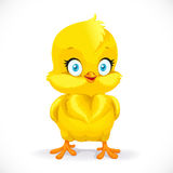 Beautiful little yellow chicken Royalty Free Stock Photo
