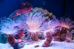 Beautiful live corals on the seabed. Excellent background of the underwater world stock photography