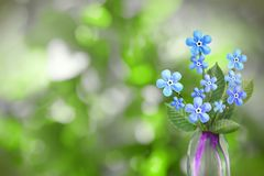 Beautiful live forage bouquet bouquet in glass vase with blank place for your text on left on tree leaves blurred bokeh background. Beautiful live forage bouquet Royalty Free Stock Image