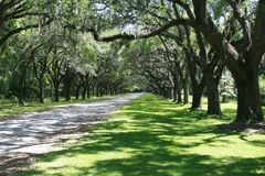Free Beautiful Live Oak Driveway Royalty Free Stock Image - 101830656