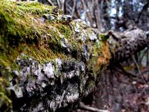 Fallen log in the Woods Royalty Free Stock Images