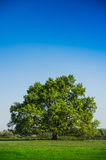 Beautiful lonely tree Royalty Free Stock Photos