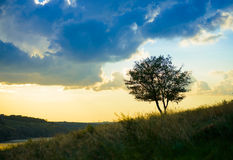 Beautiful Lonely Tree on Sunset Royalty Free Stock Photography