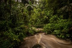 Rain forest, trees and plants, river Stock Photo