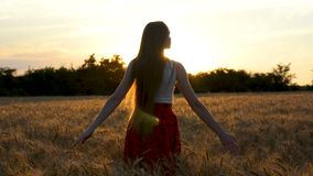 Beautiful long-haired young woman spinning in ears of wheat. The setting sun. Inspiration.  stock video footage