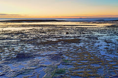 Beautiful Long Reef, NSW Australia just before sunrise Royalty Free Stock Image