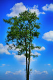 Beautiful lonly tree Royalty Free Stock Images