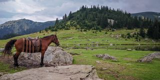 Beautiful look at horse with mountains in the background royalty free stock images