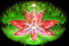 Beautiful Lotus Stock Photography