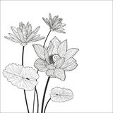 Beautiful lotus flower line illustration. Vector abstract black Royalty Free Stock Photos