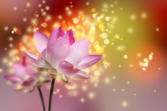 Beautiful lotus flowers. Colorful background Royalty Free Stock Photos